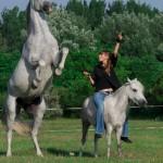 Ágaskodás egy másik ló hátáról  és oldalról kérve