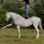 Jambette a ló hátán állva