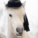 Hex és a kalap