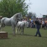 Sződliget Regionális Mezőgazdasági Szakkiállítás